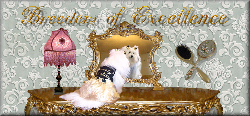 Breeders of excellence grooming information coton de tulear grooming solutioingenieria Image collections